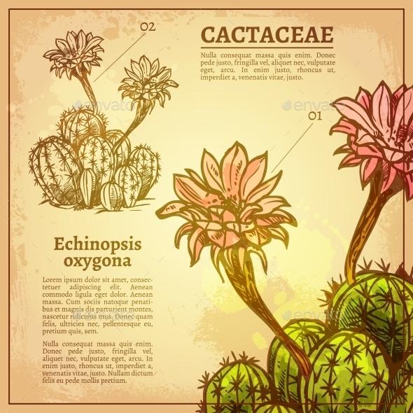 Cactus Botanical Illustration - Flowers & Plants Nature