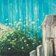 Camomile - PhotoDune Item for Sale