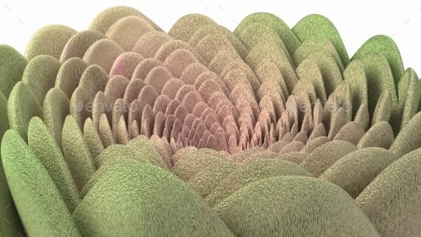 Spiral Flower Fluffy Succulent - Nature Backgrounds
