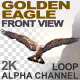 Golden Eagle Front View - VideoHive Item for Sale