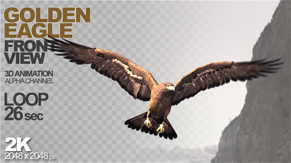 Golden Eagle Front View