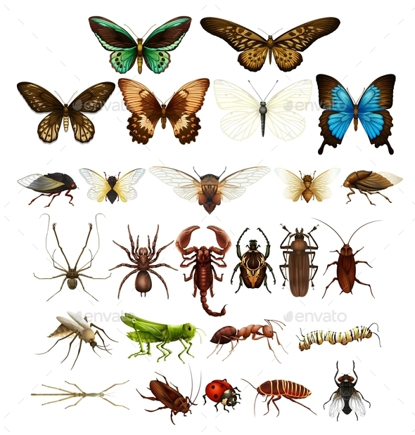 Wild Insects in Various Types - People Characters