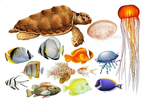 Different kind of Sea Animals - Animals Characters