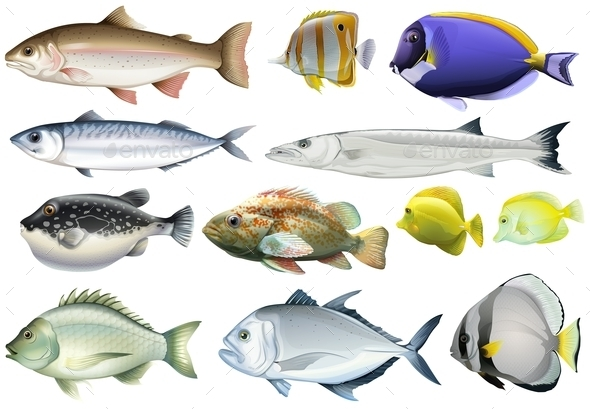 Different Kind of Ocean Fish - Animals Characters