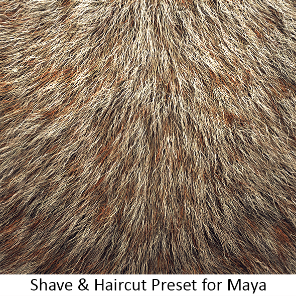 Shave Animal Fur4 - 3DOcean Item for Sale
