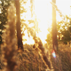 Evening Forest - VideoHive Item for Sale