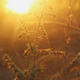 Rays of the Sun at Sunset in the Forest - VideoHive Item for Sale