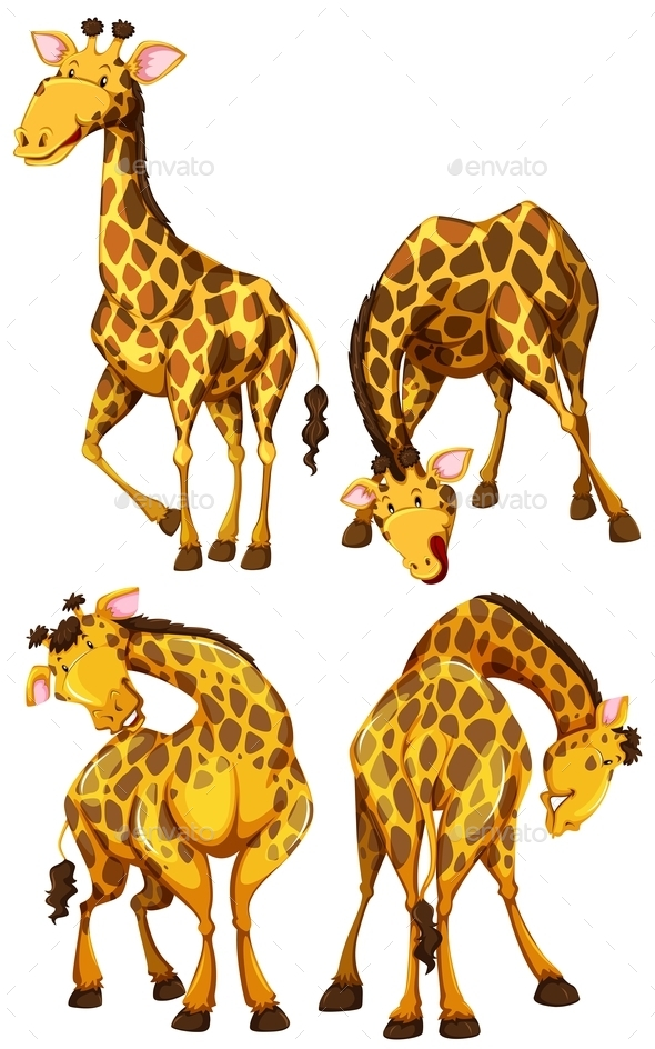 Giraffe in Four Different Poses - Animals Characters