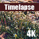 Beautiful Wild Flowers In The Field - VideoHive Item for Sale