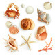 Seashells Illustration Icons - GraphicRiver Item for Sale