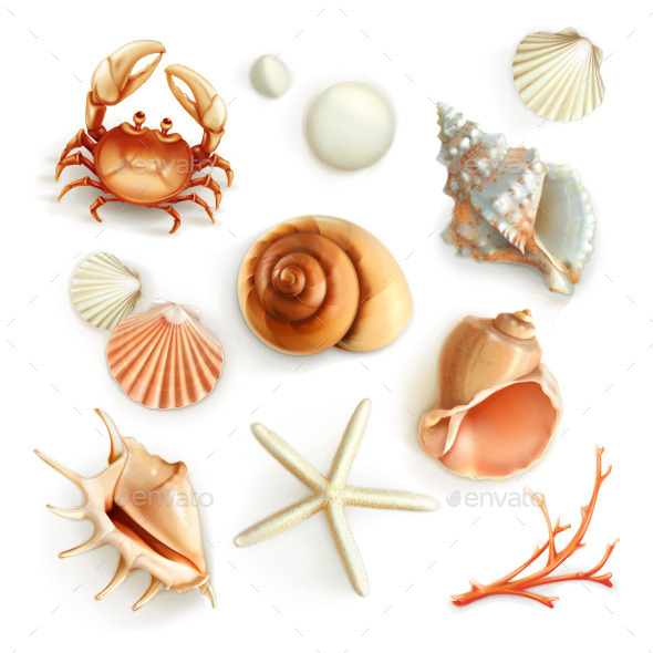 Seashells Icons - Organic Objects Objects