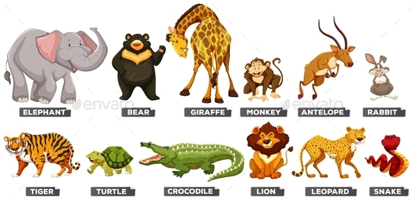 Wild Animals in Many Types - Animals Characters