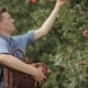 Young Man Gathering Apples In The Garden - VideoHive Item for Sale