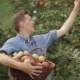 Young Man With a Basket Full Of Apples - VideoHive Item for Sale