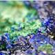 Malachite and Azurite Crystals
