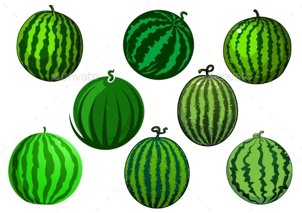 Fresh Green Striped Watermelons Fruits