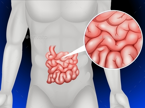 Small Intestine in Detail - People Characters