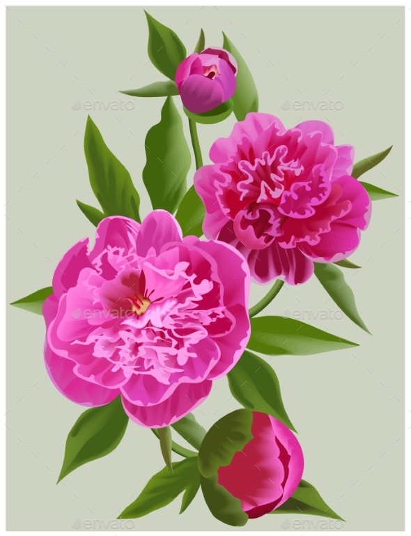 Realistic Pink Peonies. Vector Flower Illustration - Flowers & Plants Nature