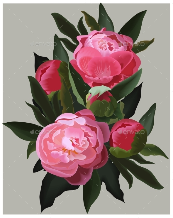Realistic Pink Peonies Vector Flower Illustration