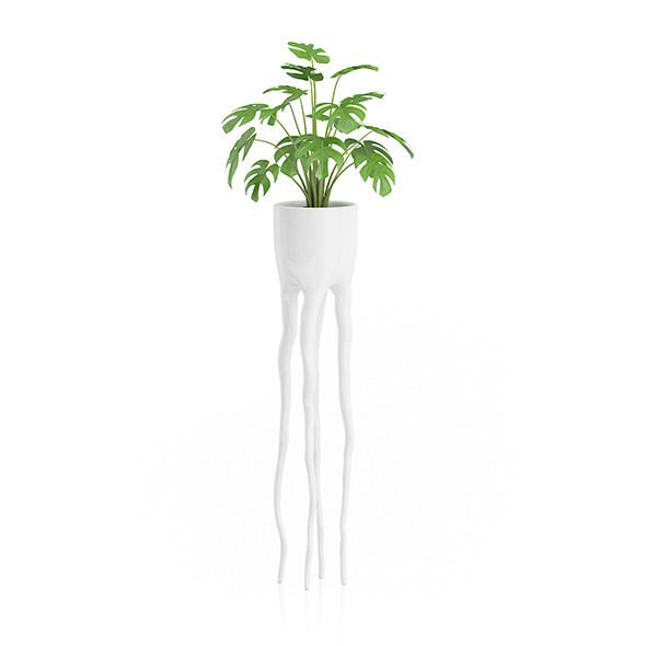 Monsteria Plant in Tall Pot - 3DOcean Item for Sale