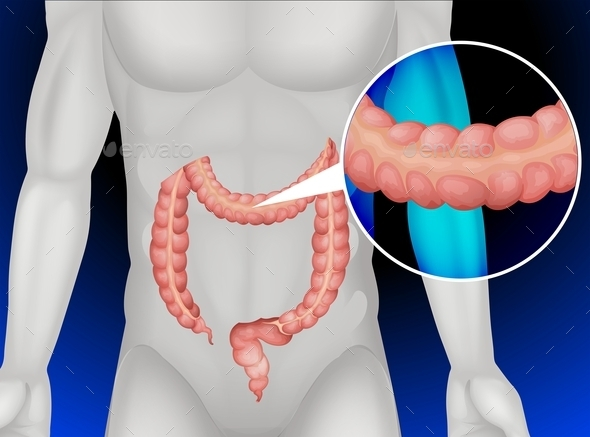 Large Intestine in Human Body - Miscellaneous Conceptual