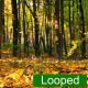 Autumn Leaf Fall in the Park - VideoHive Item for Sale