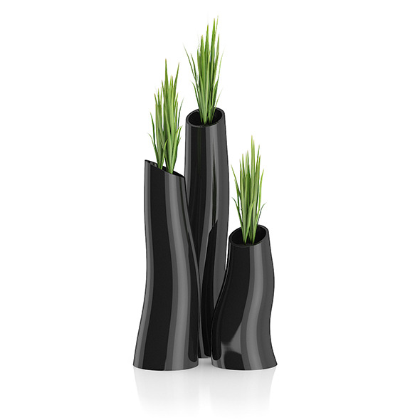 Three Plants in Black Pots