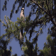 Bird jumps from tree perch - VideoHive Item for Sale