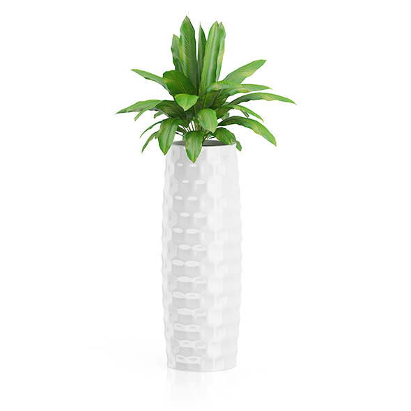 Plant in Tall White Pot - 3DOcean Item for Sale