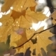 Autumn Leaves On The Wind  Blur Forest Background - VideoHive Item for Sale