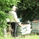 Beekeepers Are Engaged On The Work Near Forest3 - VideoHive Item for Sale