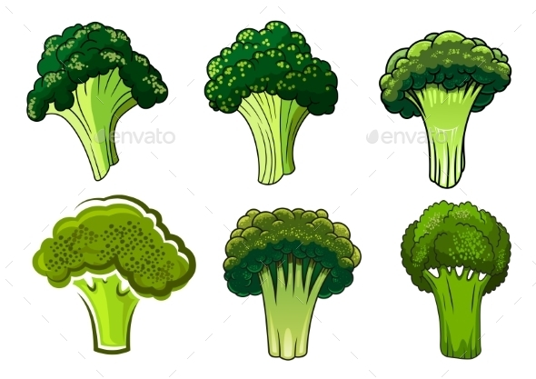 Isolated Green Ripe Broccoli Vegetables - Food Objects