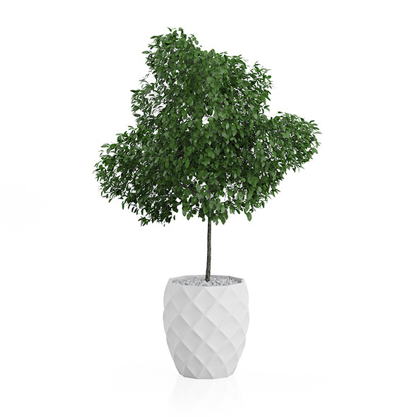 Potted Tree - 3DOcean Item for Sale