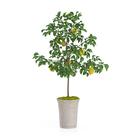 Potted Lemon Tree - 3DOcean Item for Sale
