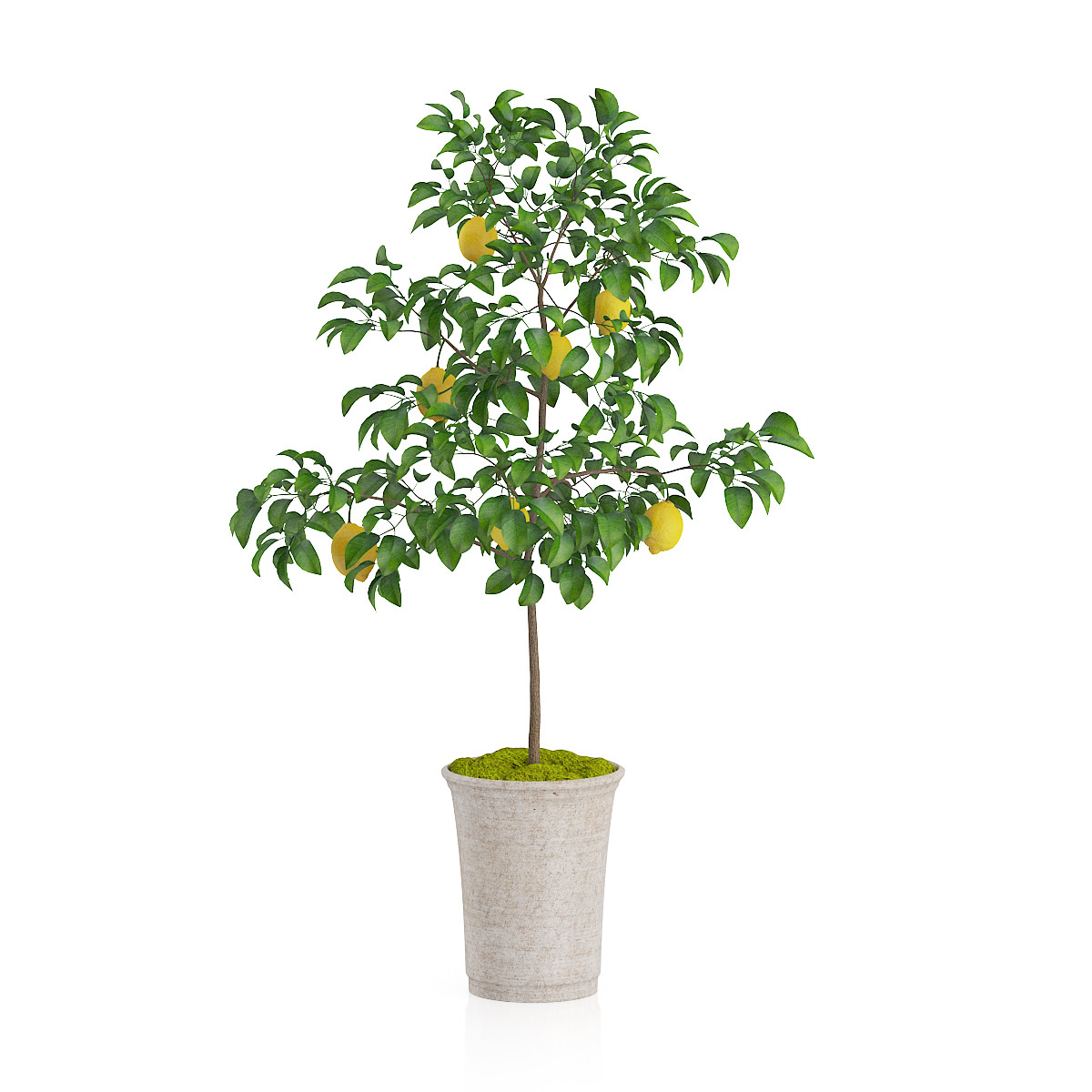 potted lemon tree by cgaxis