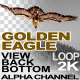 Golden Eagle Bottom View 2 - VideoHive Item for Sale