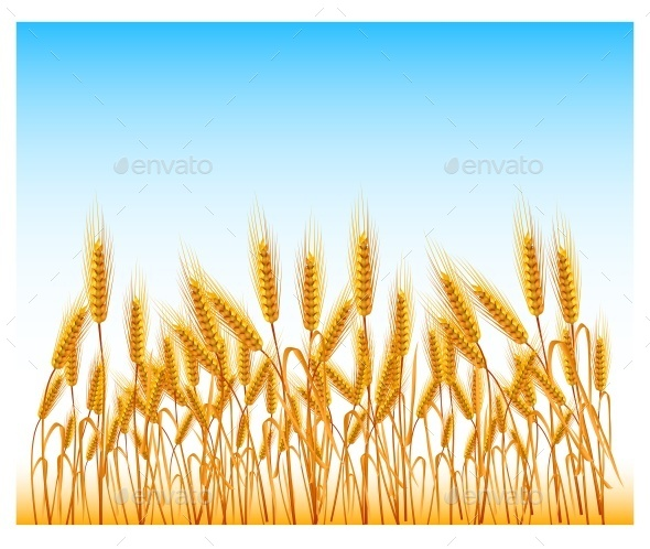 Field of Wheat - Miscellaneous Vectors
