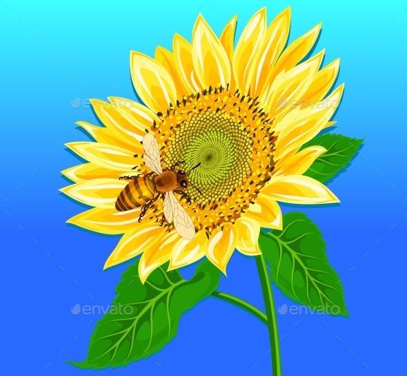 Sunflower - Miscellaneous Vectors