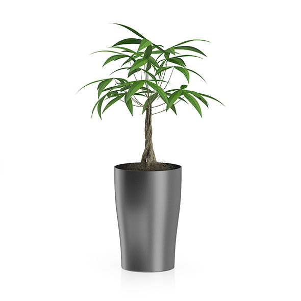 Money Tree in Dark Pot - 3DOcean Item for Sale