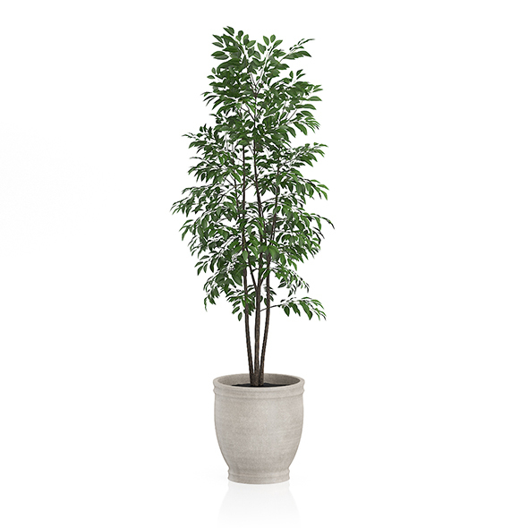 Small Tree in Stone Pot