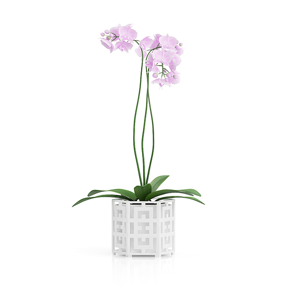 Orchid Flower in Hexagonal Pot - 3DOcean Item for Sale