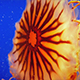 Jellyfish Gracefully Propels Itself In The Ocean - VideoHive Item for Sale