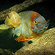 Tropical Fishes And Stingray Swimming Around - VideoHive Item for Sale