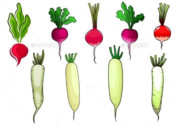 Red Radishes And White Daikon Vegetables - Food Objects