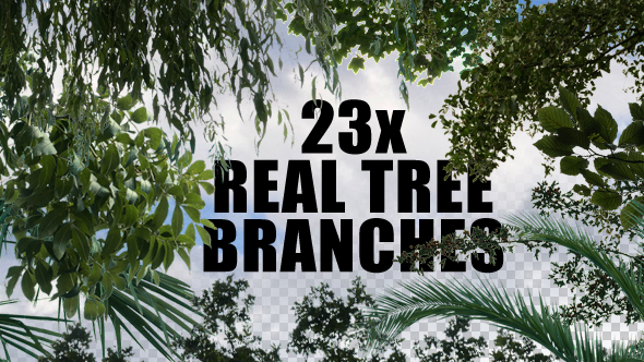 23x Real Tree Branches