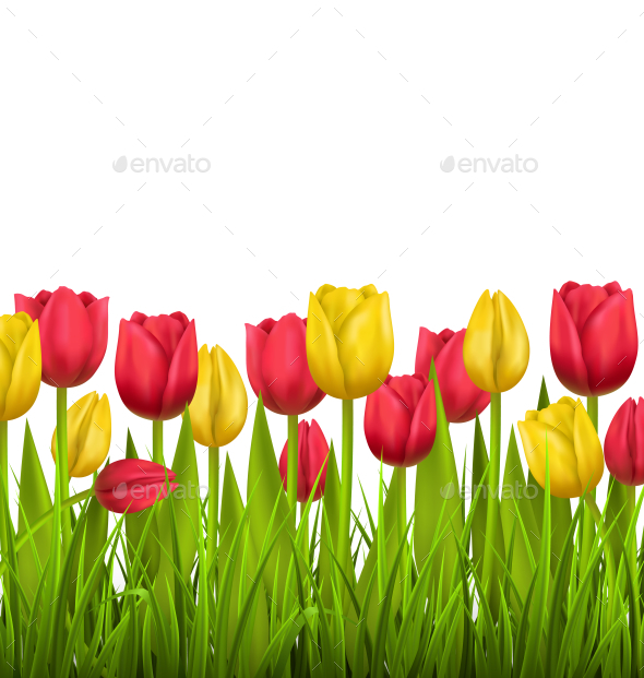 Grass Lawn with Red and Yellow Tulips on White - Flowers & Plants Nature