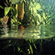 Exotic Plants Above And Below Waterline - VideoHive Item for Sale