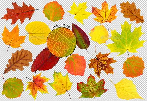 20 Colorful Autumn Leaves