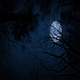 Moving Under Trees With Full Moon At Night - VideoHive Item for Sale