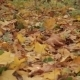 Autumn Forest - VideoHive Item for Sale